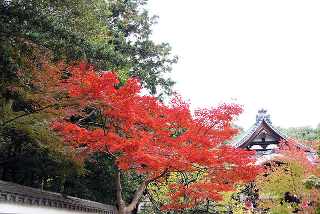 20101114_104349_秋篠寺