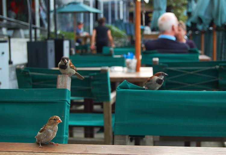 Auckland_cafe