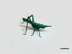 Longheaded locust (Al3bbasi.) Tags: insect origami locust kamiyasatoshi longheadedlocust al3bbasi