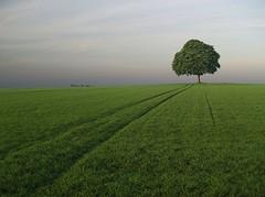 La piste (photosenvrac) Tags: landscape photo champs paysage arbre beauce beaugency régioncentre treesubject treesdiestandingup