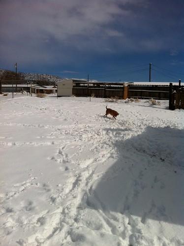 A ball dog!