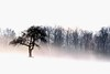 Out Of The Mist (ICT_photo) Tags: morning mist snow tree fog hill ictphoto ianthomasguelphontario