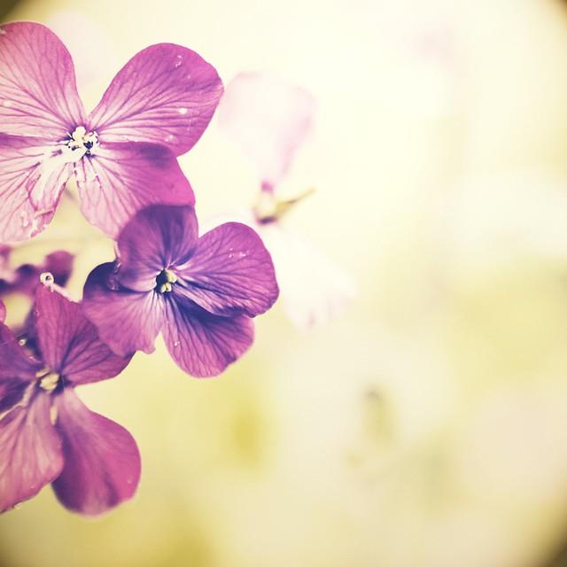 purplish