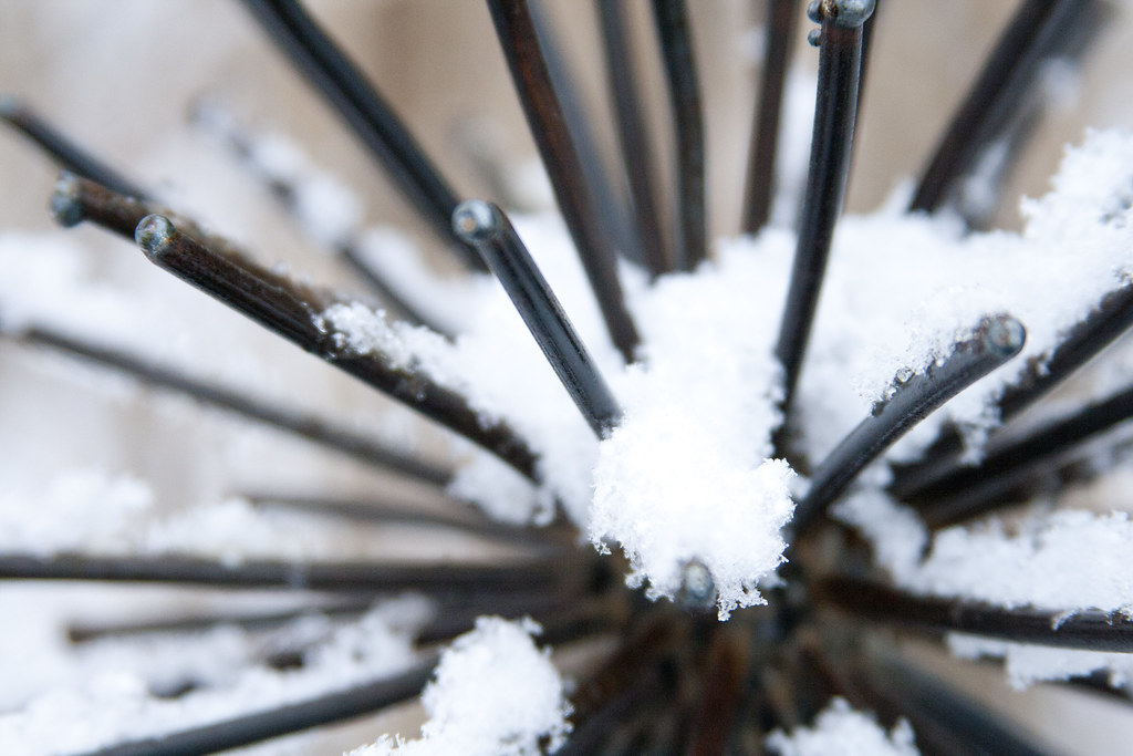Snow On Metal Allium crop