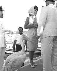 Description on back.. Mykonos Greece 1963..wife of American President Jacqueline Kennedy with local celebrity Petros the pelican (Fotogreca Press Archive..... Greece in the 1960's) Tags: lady hellas first grace jfk villa quinn anthony kelly camelot junta 60 giorgos athina zorba glyfada papadopoulos athinai    1960s    papandreou               pattakos    pallia          diktatoria  k
