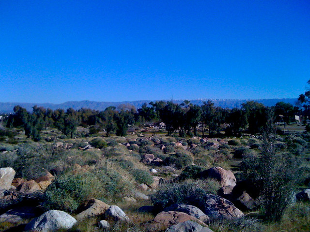 Joshua Tree in the distance