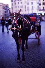 Horse fancy dress. (alicethewhale) Tags: horse rome bells carriage slidefilm pentaxmesuper mesuper kodakelitechrome