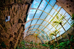 Glass roof over Fernery (duncanreddish) Tags: fern garden scotland moss nikon argyll victorian fisheye botanic ferns peninsula 8mm glasshouse hdr treefern dunoon fernery bute rbge benmore cowal d90