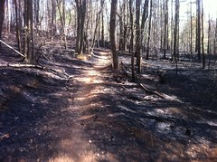 Controlled Burn on Jones Creek