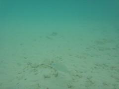 Snorkeling Time!! (Kikuoca1) Tags: ocean trip sea swim asia coconut turtle snake malaysia borneo southeast