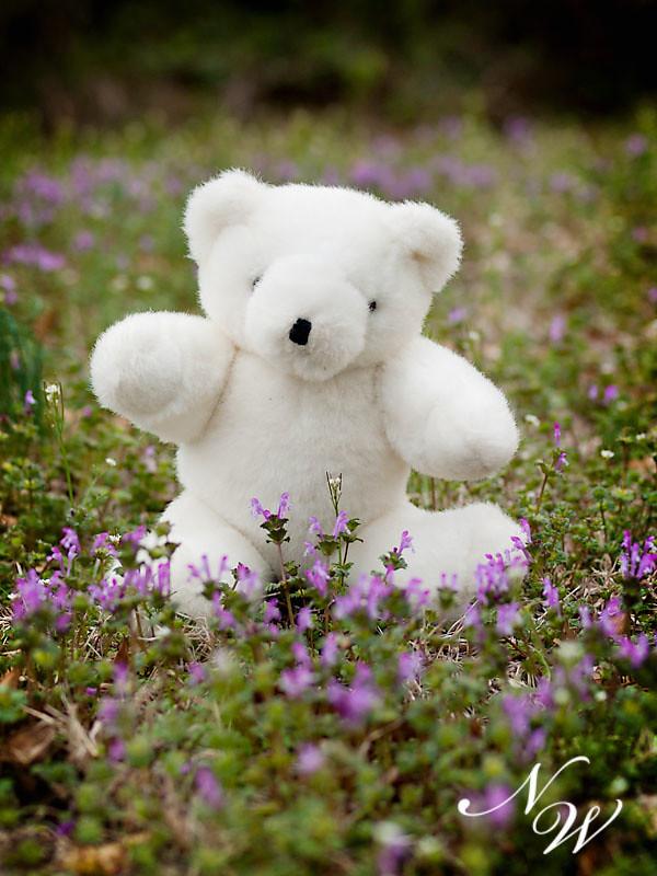 57/365 white bear