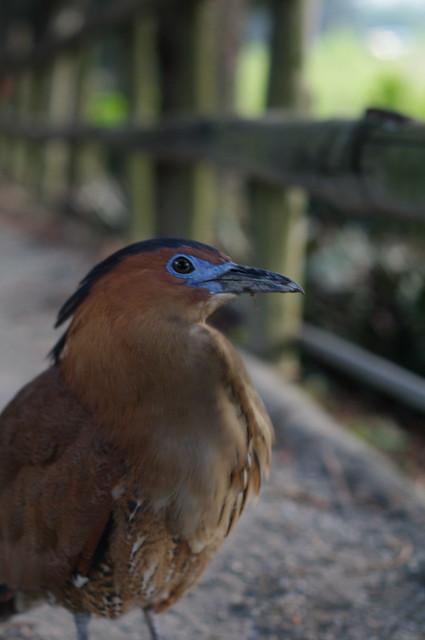 在自由廣場拍到不知名的鳥