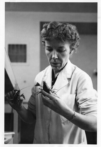 Mary Alice McWhinnie (1922-1980) was a professor of biology at DePaul University and a world-renowne