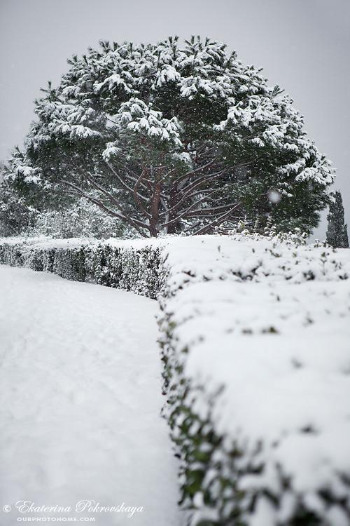 Voroncov_palace__winter_20