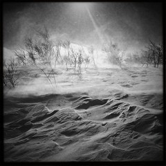 Gail force (Malou Sinding) Tags: winter bw snow nature monochrome norway blackwhite wind vision iphone4 gailforce iphoneography malousinding