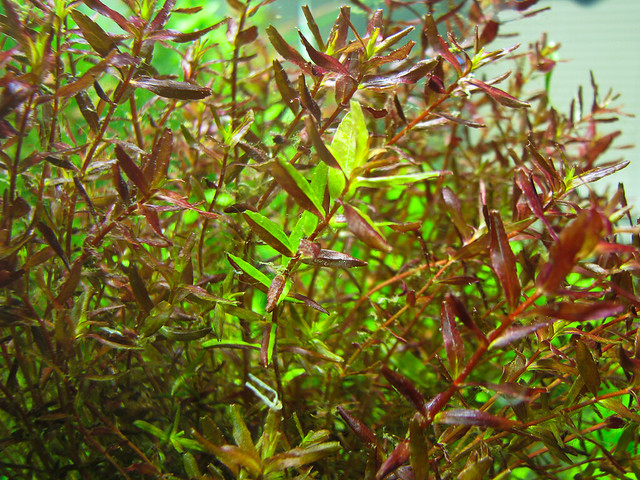 ... cool - General Aquarium Plants Discussions - Aquatic Plant Central