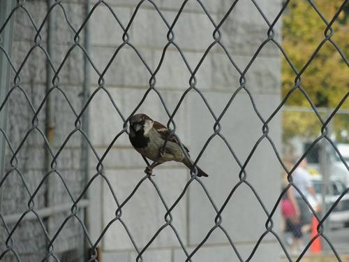 小鸟在铁丝网