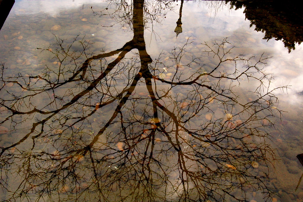 arboreal pond