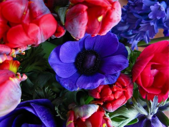 tulip hyacinth anemone flowers 005