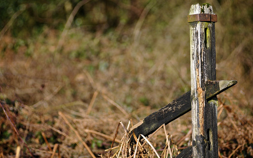 Abandoned Fence Post