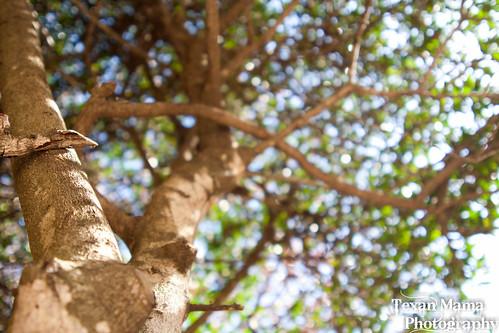 underneath - a tree