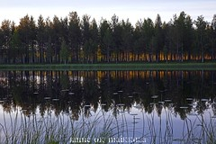 Olavin lampi - Olavis pond (ikithule) Tags: sunset summer lake nature grass pine clouds finland koivu evening pond vesi ilta lappi kes luonto pilvet jrvi auringonlasku puita reflecion heijastus lampi mnty ruoho olavi kuusi lumpeet marrasjrvi ikithule