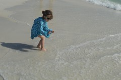 Picking up Shells on the Gulfshore