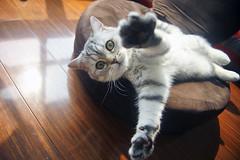 来抱抱 (heart_less_man) Tags: family pet cute home animal cat kitten chat gina hdr