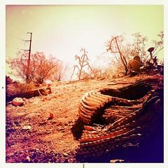 Saguaro Debris by Jason Willis