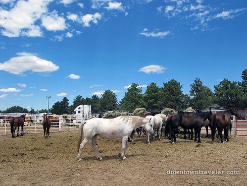 2010 Cheyenne Frontier Days in Cheyenne, Wyoming