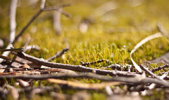 spring? (Lauren[Mackenzie]) Tags: plant green nature canon rebel 50mm spring sticks xsi