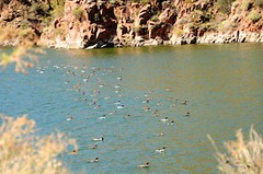 Get your ducks in a row (Debbie Prediger Photography) Tags: travel vacation phoenix beauty photography scenery debbie pheonix prediger donotcopy debbiepredigerphotography debbieprediger cadoganalberta