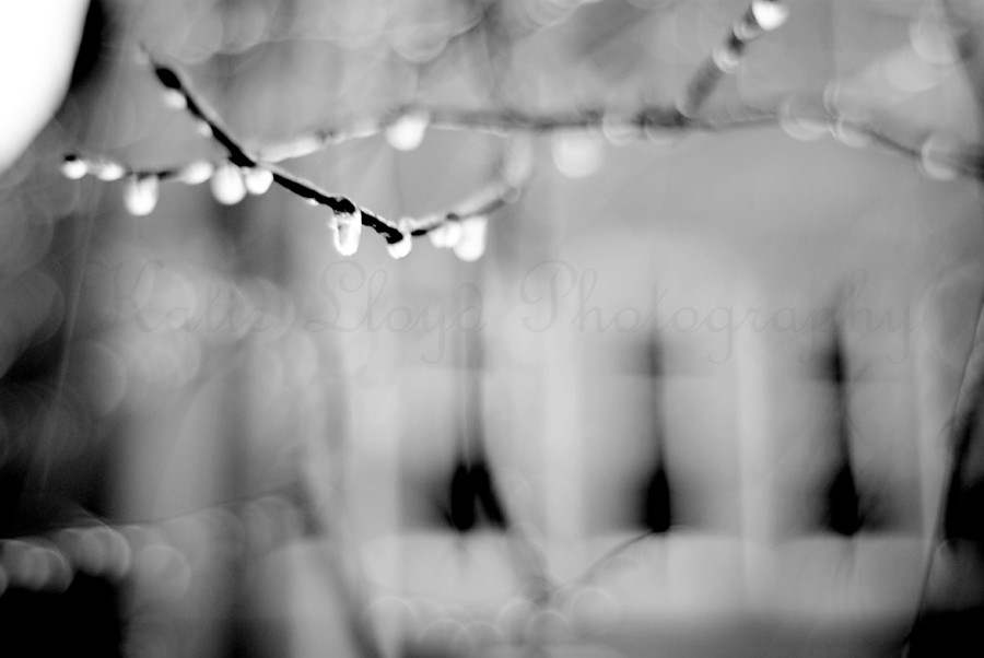 ice-on-branches-1-wm