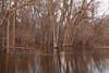 Passaic River (wmliu) Tags: usa us newjersey nj flooded passaicriver wmliu