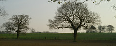 Oak Trees (Casatigeo) Tags: statelyhome englandcountryside wortleyhall syorkshire