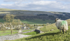 Easter greetings from the Yorkshire Dales! (bingleyman2) Tags: