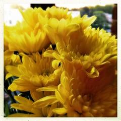 Flowers from Joe. (Kindle Girl) Tags: makemesmile flowers besthusbandever luckyme apartmentlife ipad flowersofinstagram yellow macro hipstamatic iphone365