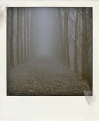 (Ernst-Jan de Vries) Tags: trees mist misty fog forest canon foggy bos poladroid nieuwweerdinge canoneos400d canonef70200f40l ernstjandevries