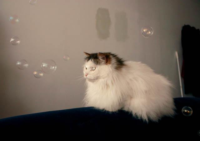 lou lou bubbles l
