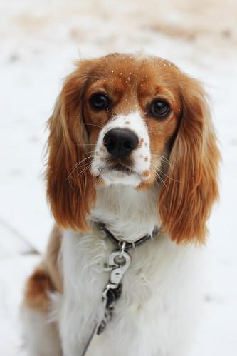 Ice Puppy