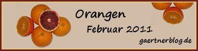 Garten-Koch-Event Februar 2011: Orangen [28.02.2011]