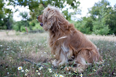 Tobby, my dog :) (*natalia altamirano lucas*) Tags: dog pet perro mascota tobby nataliaaltamiranolucas paseonavidad2010