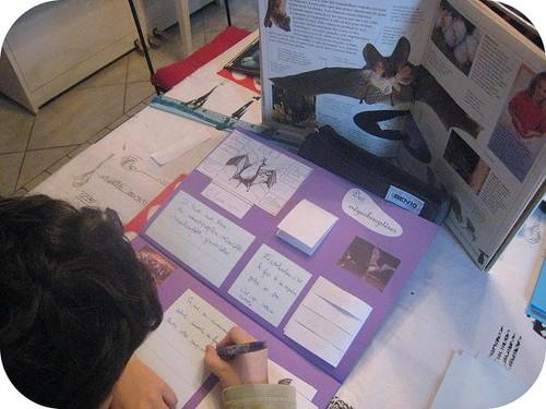 photos site lapbook Chauve souris
