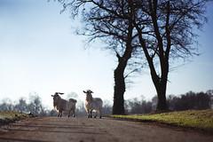 La Dombes #4 (Damien Carron) Tags: nature sunrise landscape country paysage campagne levdesoleil