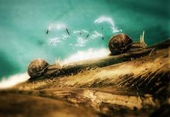 Perseverance of the Lords (Sirio Timossi) Tags: world art birds illustration artist slow cross image bokeh magic fineart flock snail move lord slug process vignette fable perseverance sirio timossi siriotimossicom