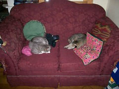 Two cats on the loveseat