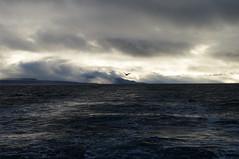 Sailing around Spitsbergen (Gregor  Samsa) Tags: sea sky bird clouds grey boat sailing ride deep dramatic svalbard sail spitsbergen nort