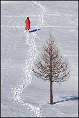 ...arbre magic... (zio.paperino) Tags: italien winter shadow red italy white mountain snow tree nature walking rouge nikon europa europe italia walk natura neve nikkor albero inverno rosso arbre abruzzo 80200 d90 ziopaperino mygearandme mygearandmepremium mygearandmebronze mygearandmesilver mygearandmegold mygearandmeplatinum mygearandmediamond rememberthatmomentlevel1
