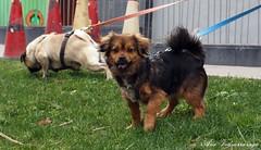 pequeño (Ane Vidaurrazaga) Tags: dogs animal perros txakurrak 2011 e620