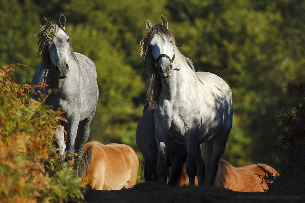 Una de caballos